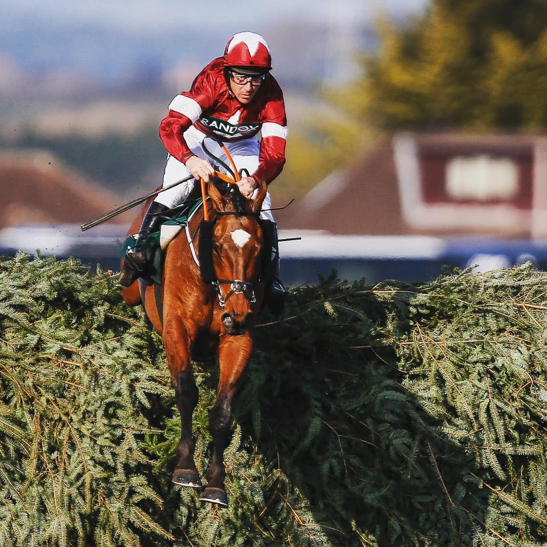 At The Races On Instagram The Grand National Hero Is Back Tomorrow Tigerroll Horse Horseracing Jump Grand With Images National Heroes Irish Horse Grand National