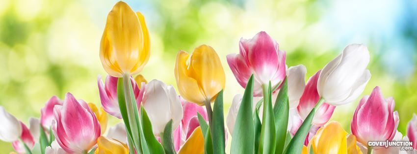 Spring Time Flowers Cover Photos Pinterest Cover Photos Cover