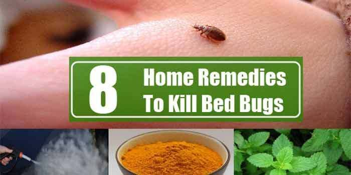 Home Remedies To Kill Bed Bugs Home Remedy Pinterest Bugs Bed