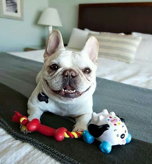 Free Pet Toys At Petsmart Dog Friends Dog Friendly Hotels Pet Toys