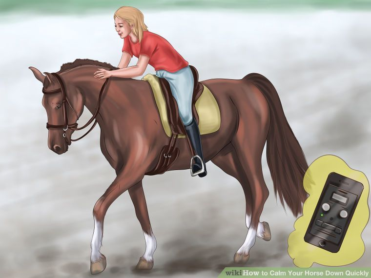 Calm Your Horse Down Quickly Horses Horse Training Animals