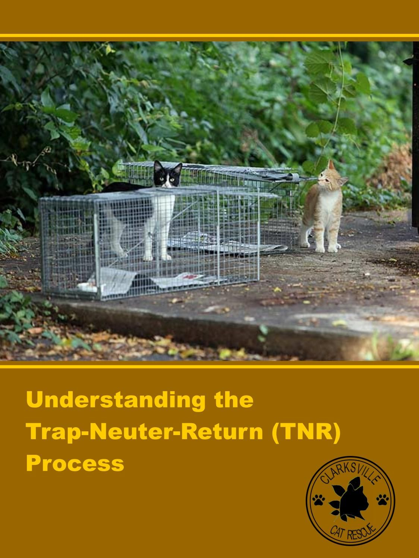 Understanding the TrapNeuterReturn (TNR) Process