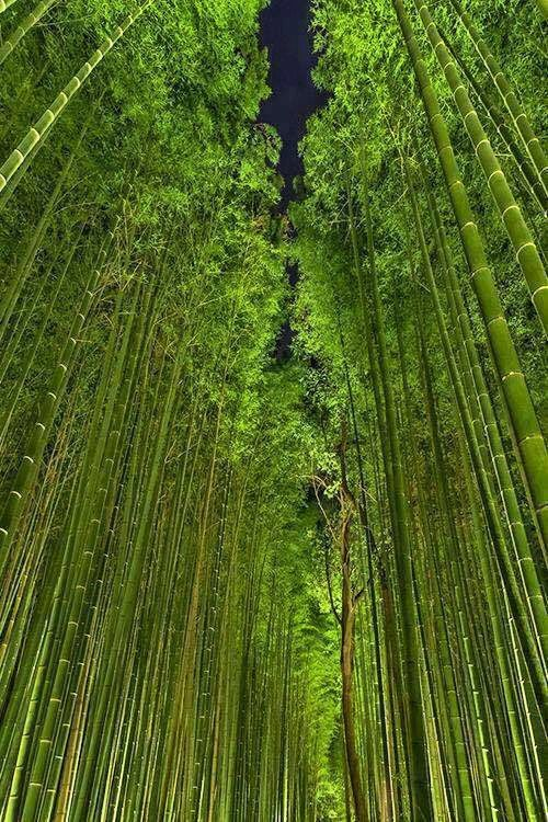 Beautiful Bamboo Forest By Night Arashiyama Kyoto Japan Green - This amazing image is being called the most beautiful photo of kyoto ever