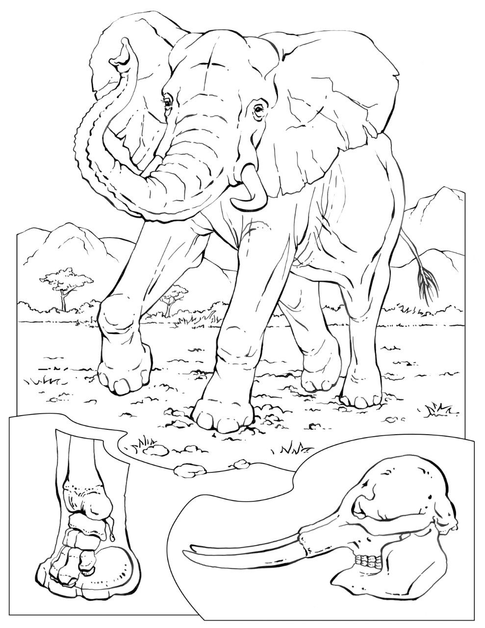 Coloring Book Animals A To I Elephant Coloring Page Animal Coloring Pages Coloring Books