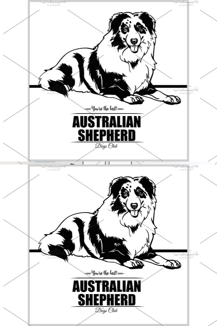 Australian Shepherd vector illustration for tshirt