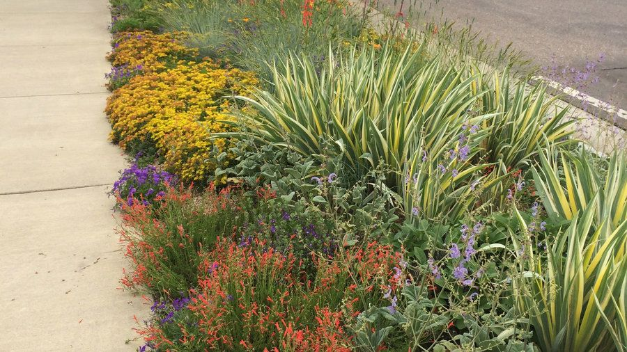 Hotter than hell | That narrow strip of land between the sidewalk and street—you know, the spot that the sprinklers don't quite reach—has a big impact on your home's curb appeal. Here are our favorite ideas to transform your hellstrip into a little patch of heaven