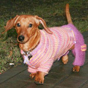 вяжем штанишки для питомцев собаки одежда для собак и вязание