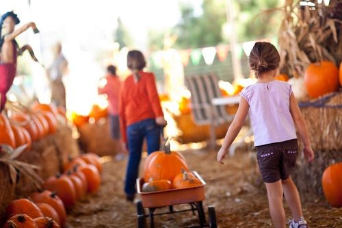 There are a plethora of pumpkin patches and corn mazes in the area where you can pick your own pumpkins and more. Check out one or try them all! Pumpkin Patches and Corn Mazes in Colorado Springs Diana's Pumpkin Patch Diana's Pumpkin Patch is known for its corn maze, featuring...