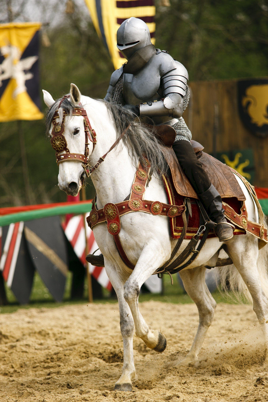 отличие рыцари на лошадях картинки что ветру калитки