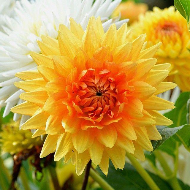 Flowerybubbles Most Beautiful Flowers Beautiful Flowers Flowers