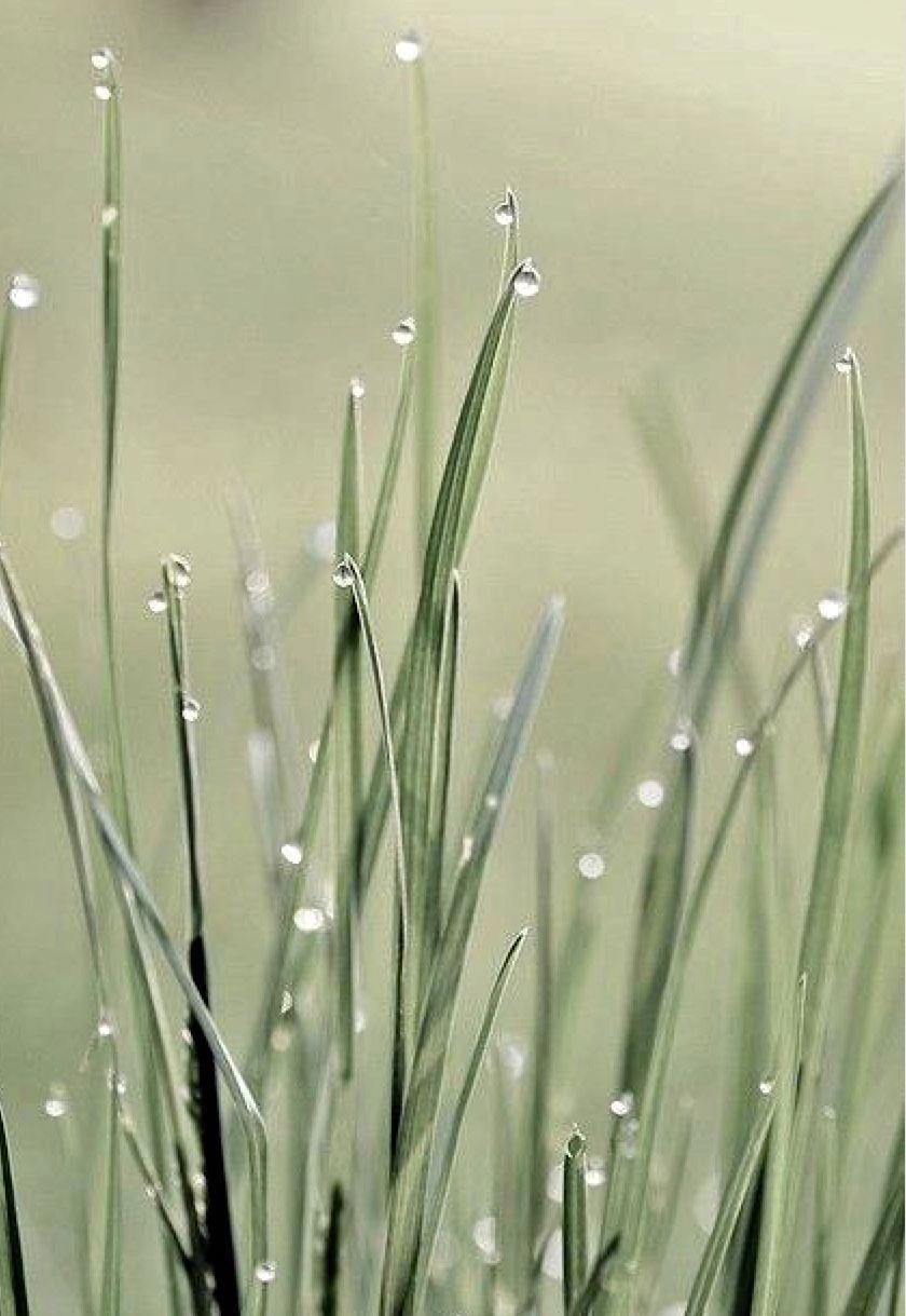 Organic Gardening Gifts Refferal: 5755769982 | Green ...
