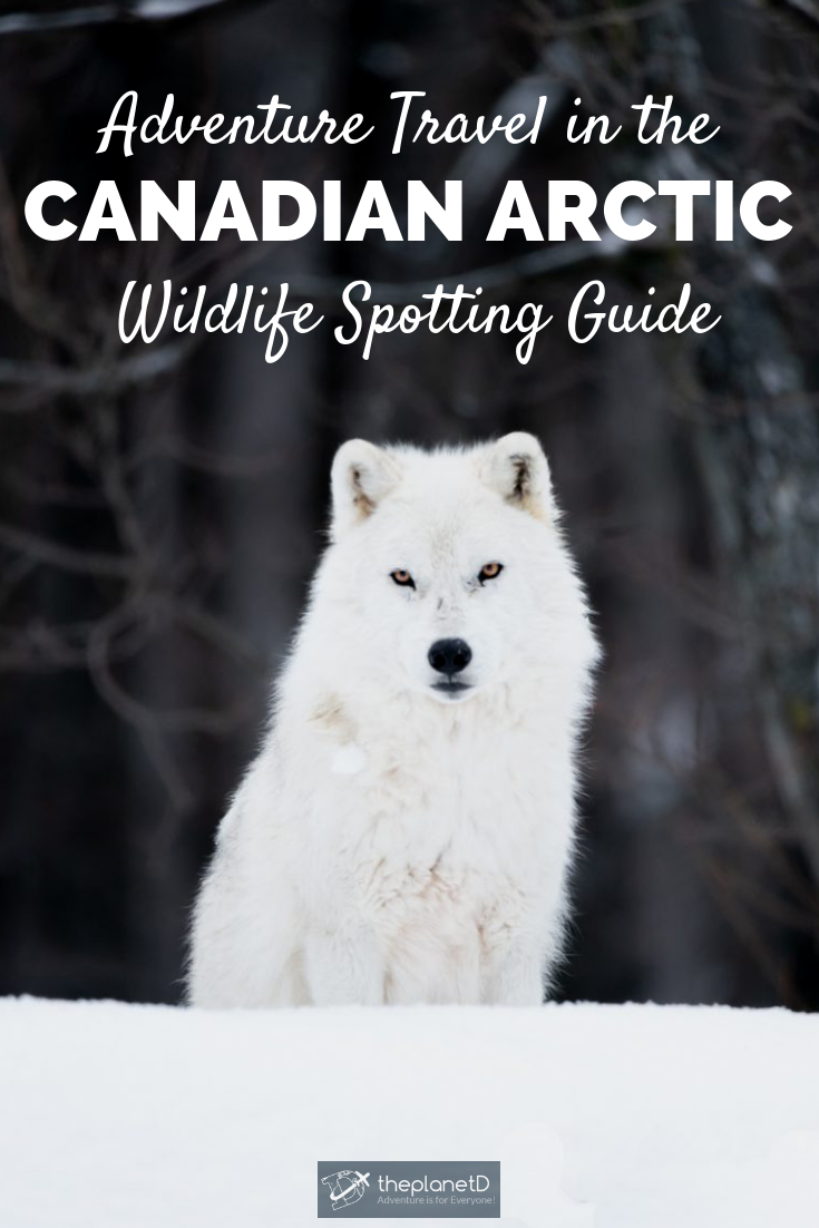 Adorable Tundra Animals The Canadian Arctic Comes to