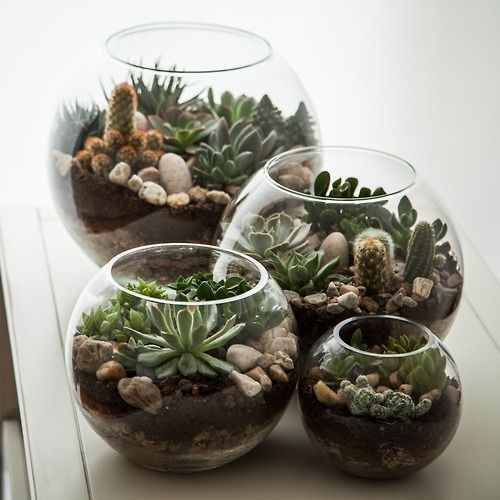 100+ Captivating Succulent Plants Garden Ideas #succulentterrarium