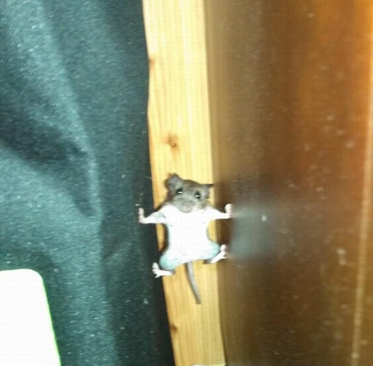 """Este ratón acaba de ver """"Misión Imposible""""."""