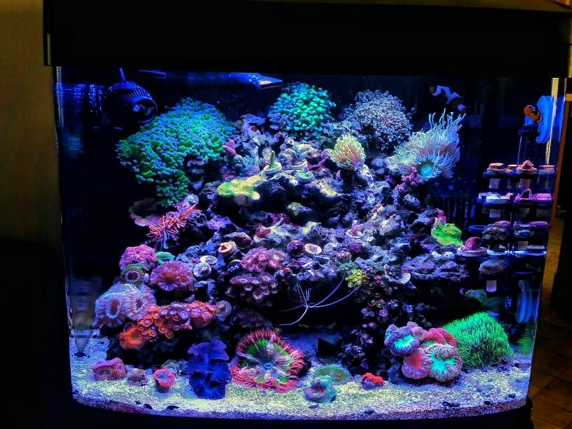 coralife biocube 29 gallon update 2 saltwater aquarium