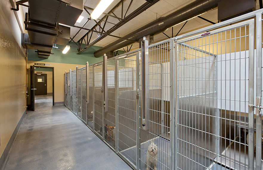 Animal Shelter Design Stanislaus County Animal Services