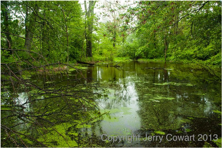 Jerry just listed Spring Lush Green Pond With Blossoms Nature Fine Art Photography on The CraftStar @TheCraftStar #uniquegifts #photosbyjerry