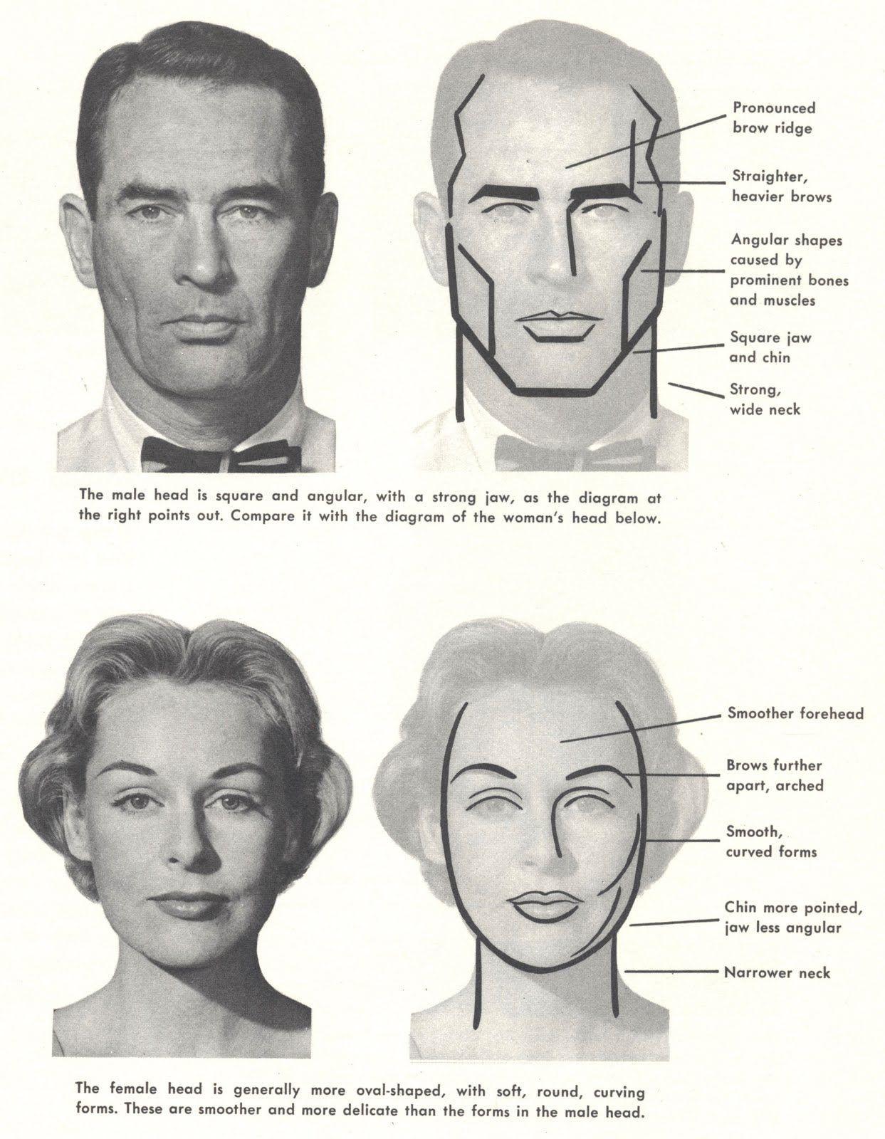 resultado de imagen para male female face differences draw drawing