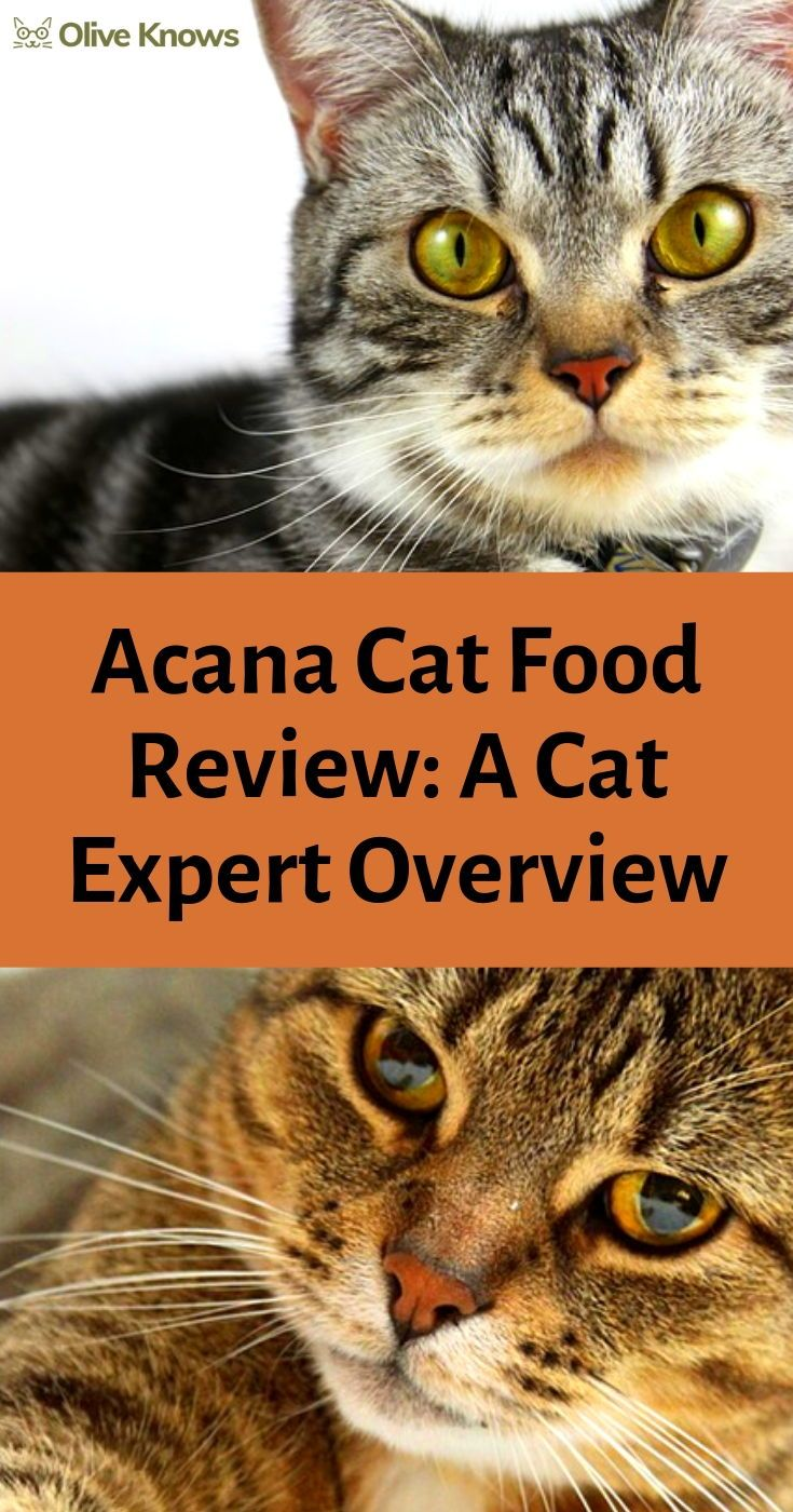 Acana Cat Food Review A Cat Expert Overview Cat food