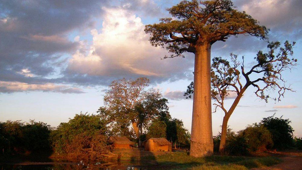 Avenue of Baobabs Village