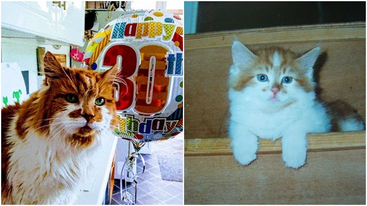 Meet Rubble the oldest cat in Britain has just celebrated