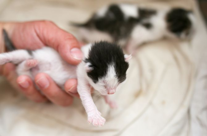 10 Interesting Facts About Newborn Kittens Baby Kittens Funny Animal Quotes
