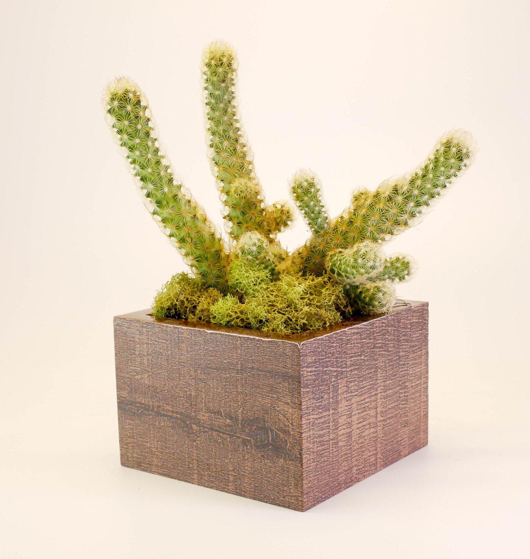 Cork Planter Indoor Planter Modern Planter Succulent | Reclaimed ...