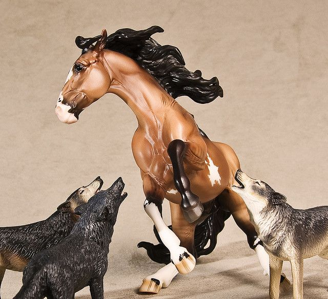 Horse and wolves by photos for fun, via Flickr I want those breyer wolves