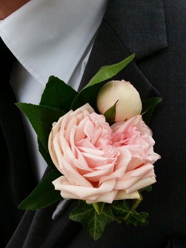 bridal piano garden rose boutonniere with ivy and orangetree foliage