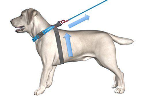 No Pull Dog Halter Harness Patented Technology Safe Dog Leash