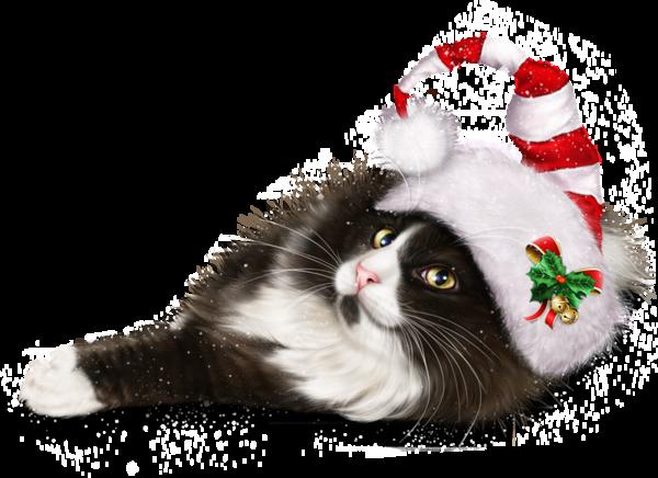 bonnet noel chat chat tubes Noel chats Noel cats illustration dessin bon| Cat  bonnet noel chat