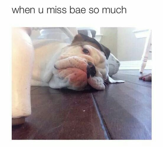 Pin By Becca Clark On Funnies When You Miss Bae Missing Bae Bae