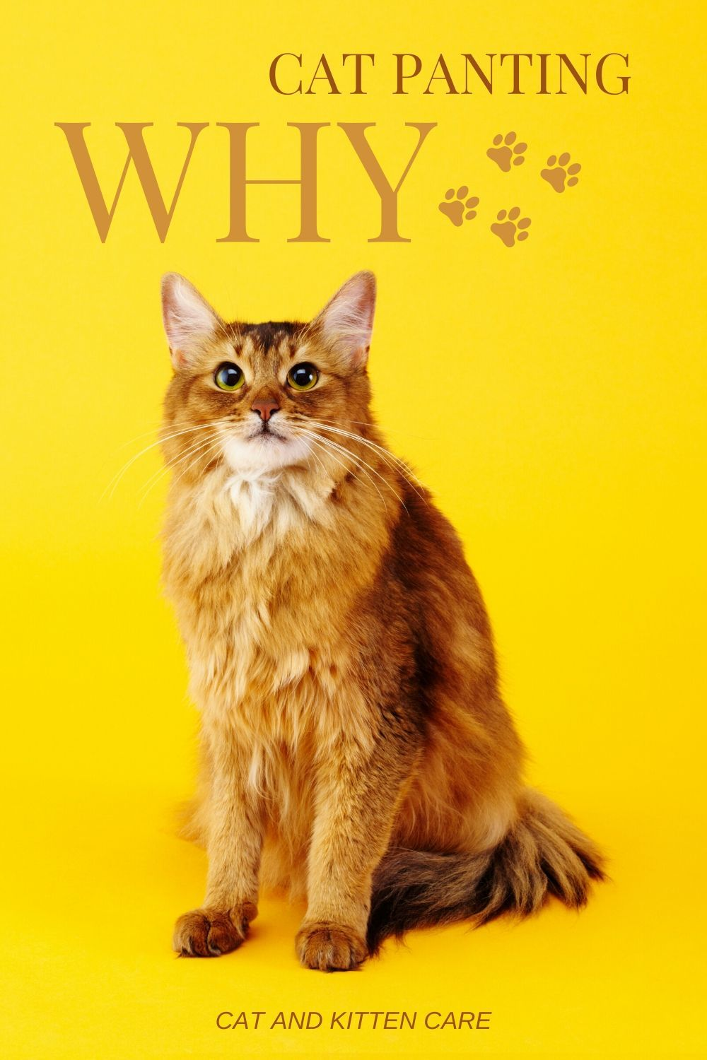 Why Is My Cat Panting Cat And Kitten Care In 2020 Kitten Care Cat Illnesses Cats And Kittens
