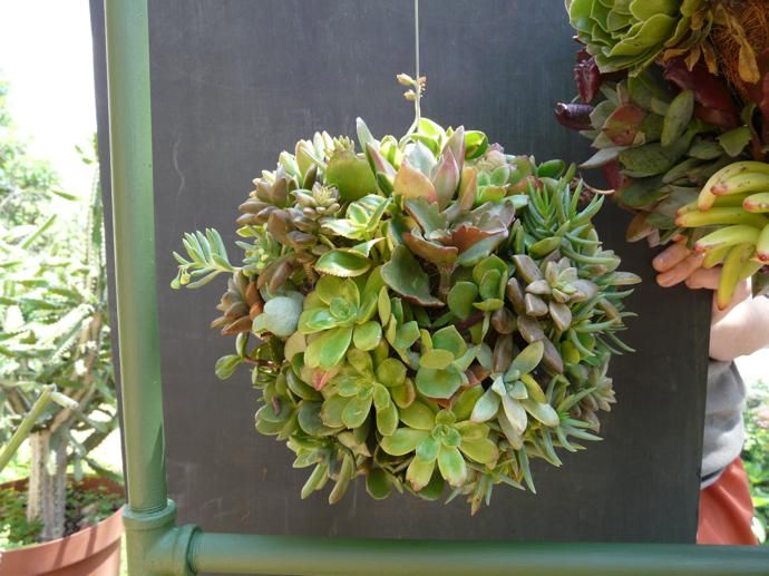 hanging succulent ball - Google Search | Hanging ...