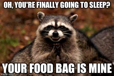 Funny Hiking Meme : Hanging your food bags and using cannisters aren't just to foil the
