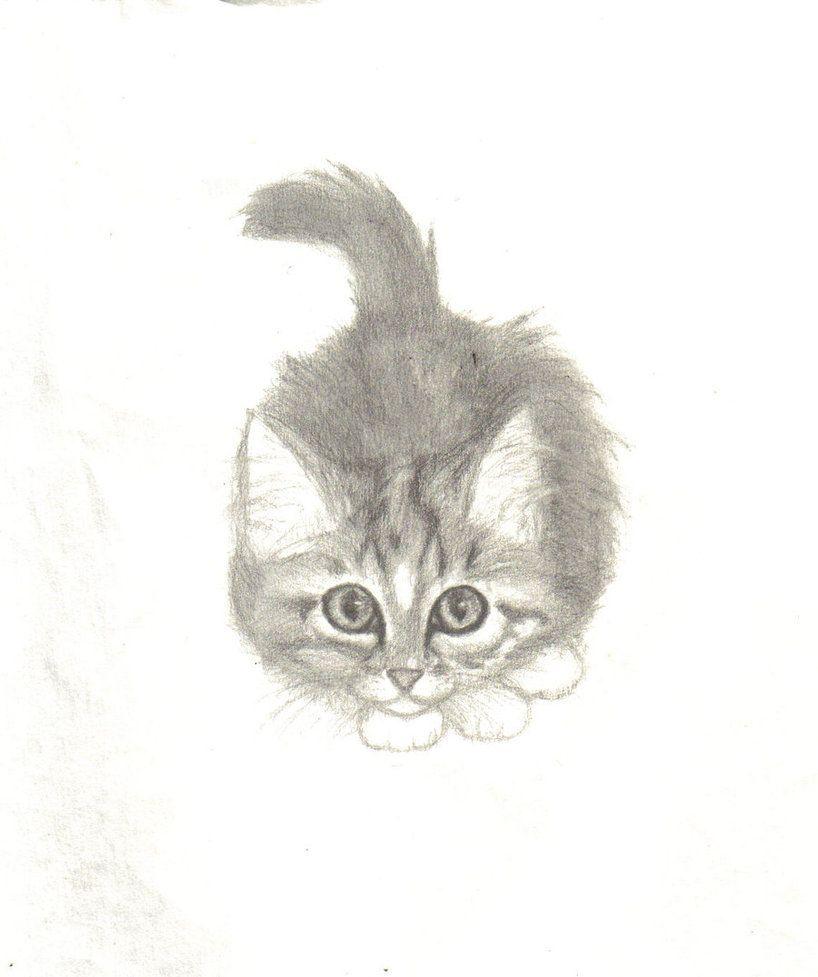 Kitten drawings maine coon kitten by nekoshadowcat kitten