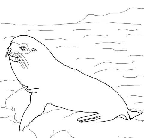 Lobo Peletero de las Galpagos Dibujo para colorear  animales