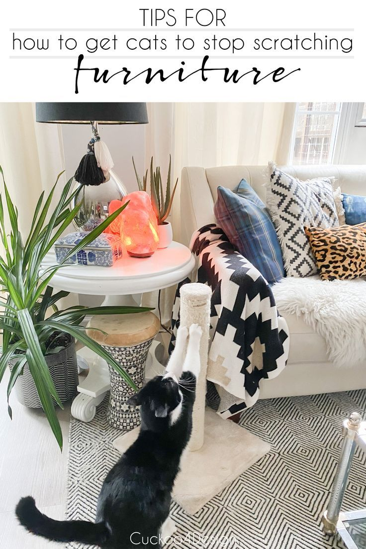 How To Get Cats To Stop Scratching Furniture Cuckoo4design In 2020 Stop Cat Scratching Furniture Cat Scratching Furniture Furniture Scratches