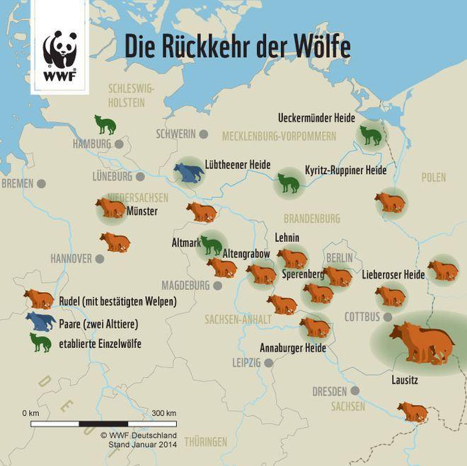 deutschland ist wieder wolfsland aber wo leben die meisten w lfe unsere deutschlandkarte gibt. Black Bedroom Furniture Sets. Home Design Ideas