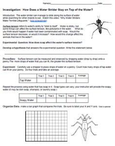 Investigation How Does A Water Strider Stay On Top Of The Water Cells Worksheet Life Science Biochemistry