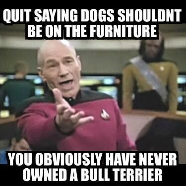 you have obviously never owned a bull terrier