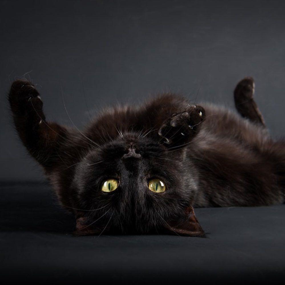 Zelda cherry_moon_light Infos amp; rservations : #cat