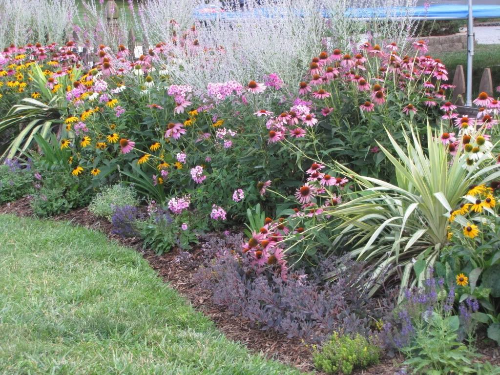 Echinacea russian sage phlox rudbeckia my outside for Perennial landscaping ideas