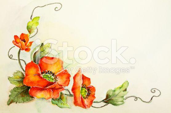 Original Art Watercolor Poppy Flowers royalty-free stock illustration