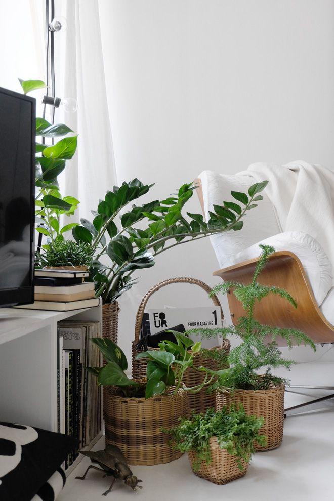 Ein Sessel im Grünen + nein, er isses nicht! Plants, Indoor - pflanzen dekoration wohnzimmer