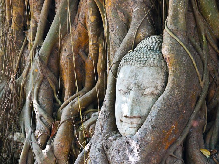 I told you all about how I got to Ayutthaya, but I didn't really let on to why I stopped there. I went for the same reason that any traveler goes: for the temple hopping. Ayutthaya is one of Thailand's former capitals and reportedly once one of the largest and most impressive cities in the …