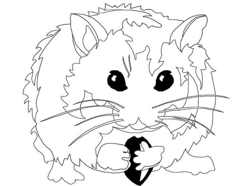 Kleuterdigitaal Hamster Kleurplaat 01 Huisdieren Kleurplaten