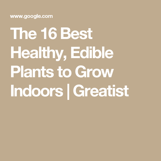 The 16 Best Healthy Edible Plants To Grow Indoors 640 x 480