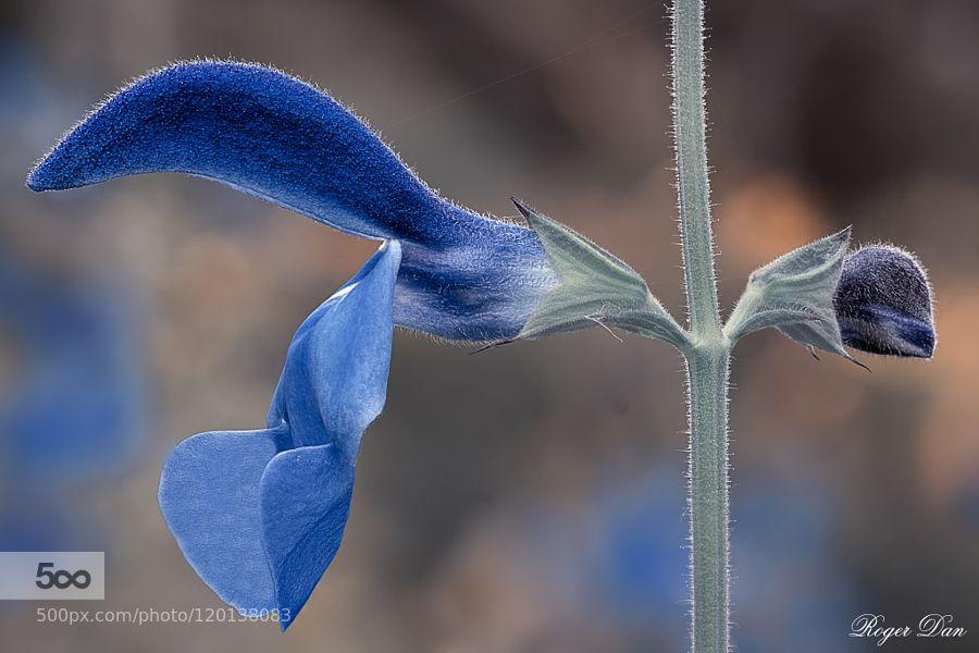 Blue Macro Composition. by jelrdan #nature