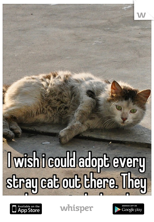 I Wish I Could Adopt Every Stray Cat Out There They Deserve To Be Loved Crazy Cats Cats Stray Cat